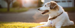 Most 20 Dangerous Things Could Kill Your Pet