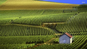 best french wine regions