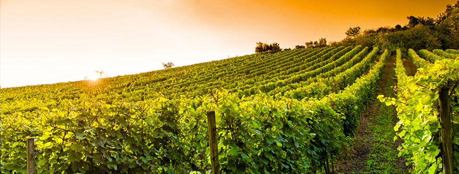 The Top 6 French Wine Regions