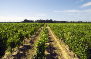 best Portugese wines list