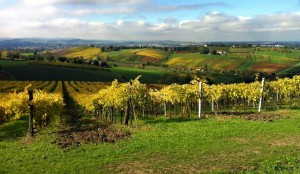 best wine regions in Italy