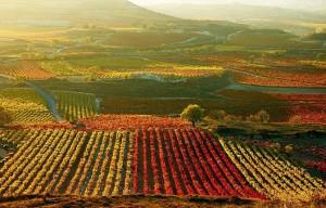 best Spanish wines list