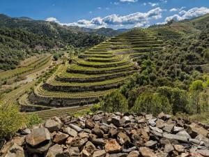 best Spanish wineyards