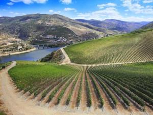 best Spanish wine regions list