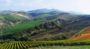 top 6 wine regions in Italy