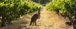 The Top 6 Australian Wines