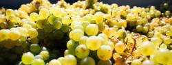 The Top 6 German Wines