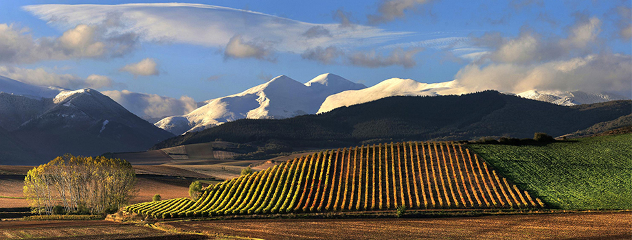 The Top 6 Spanish Wine Regions