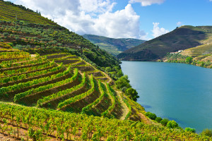 best Portugese wine regions