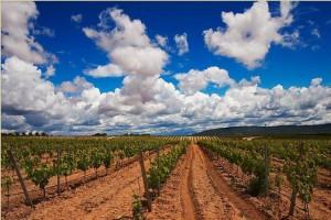 best vineyards in Spain