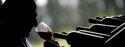 The Top 6 Wines of Argentina
